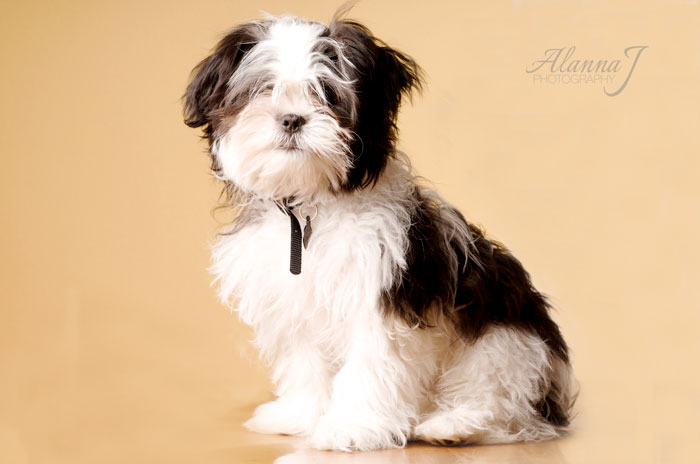 Adorable Puppy Photo