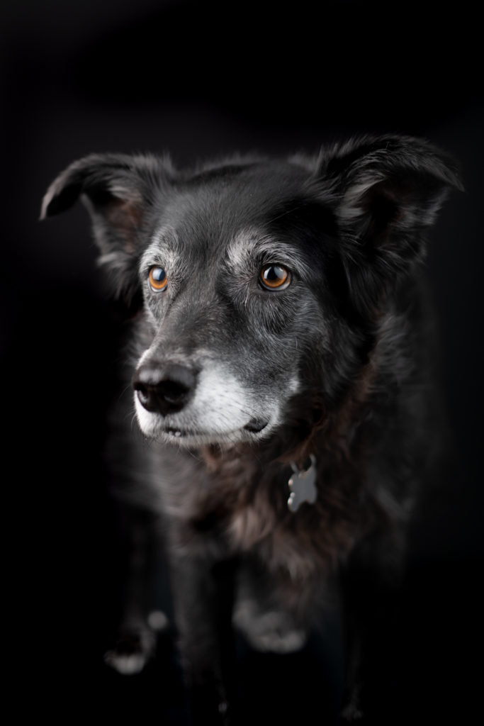 Pet Photographer Queen Creek Arizona