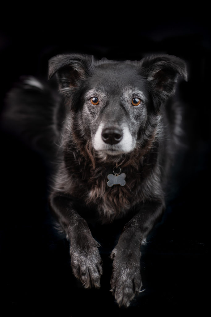 Pet Photography Dogs Queen Creek