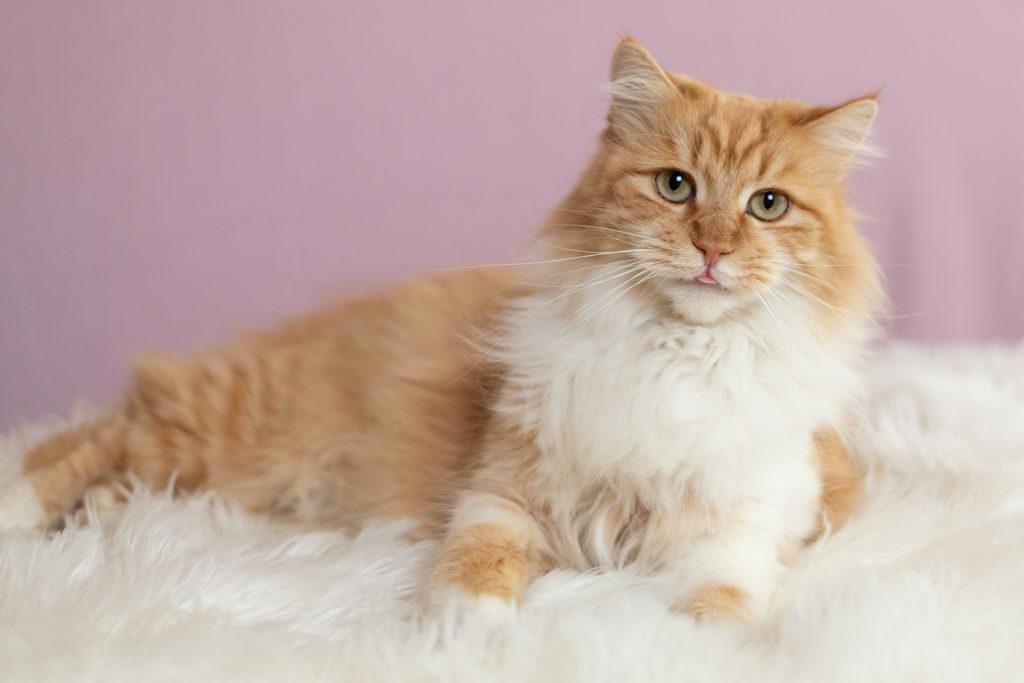 Cat Portraits for Rescue Organizaion