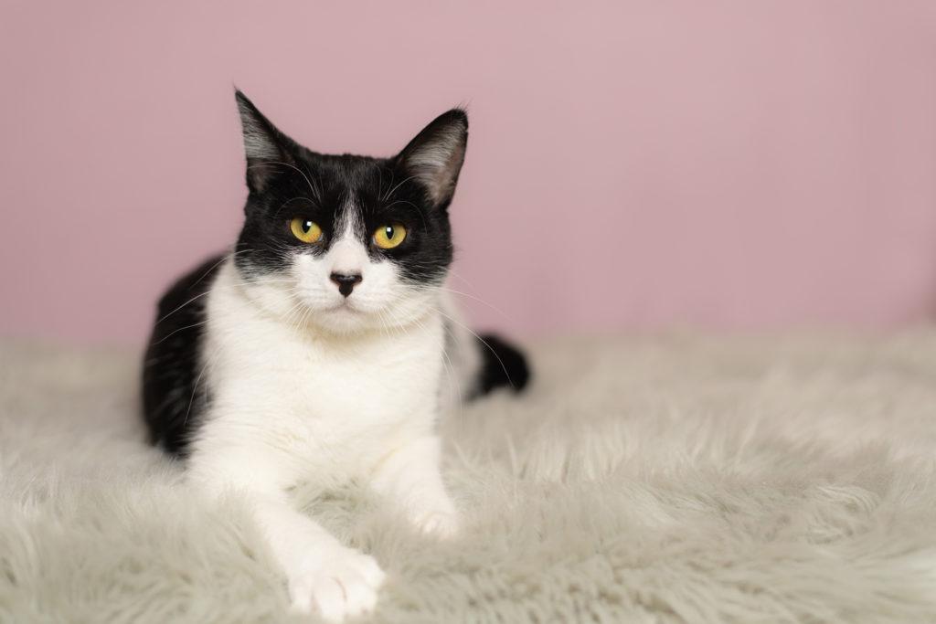 Cat Portraits Adoptables