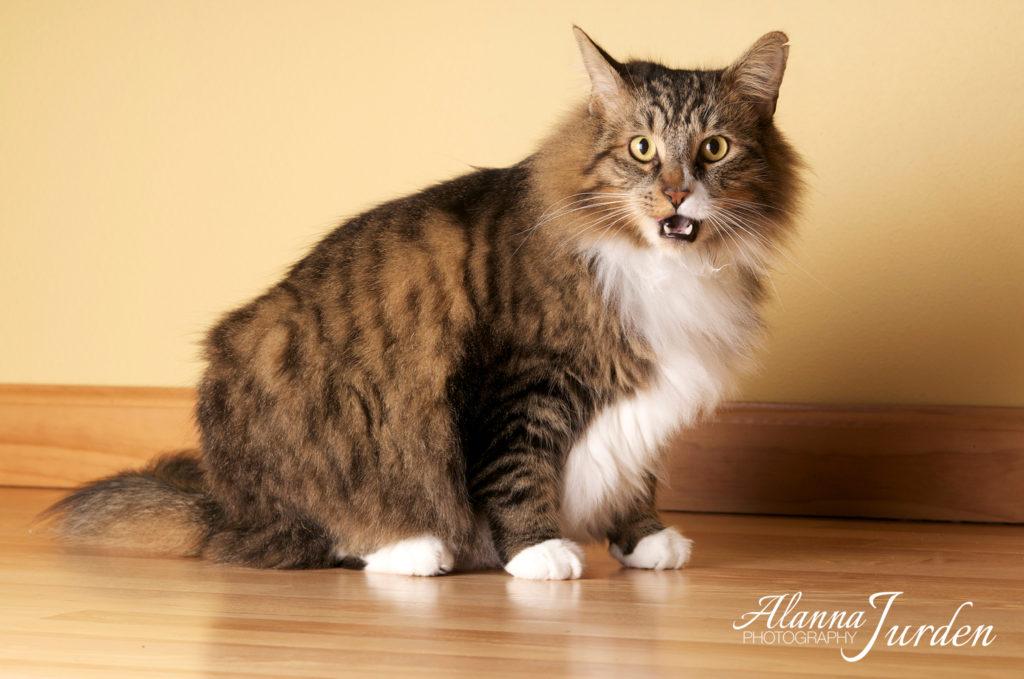 Cat portrait photographer