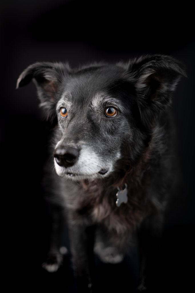 Pet Photographer Queen Creek Arizona