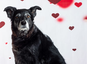 Valentine Photos With Pets
